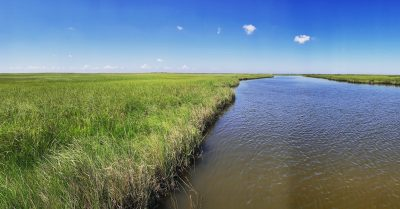 Salt marshes support a productive ecosystem and food web. Photo credit: A. McDonald