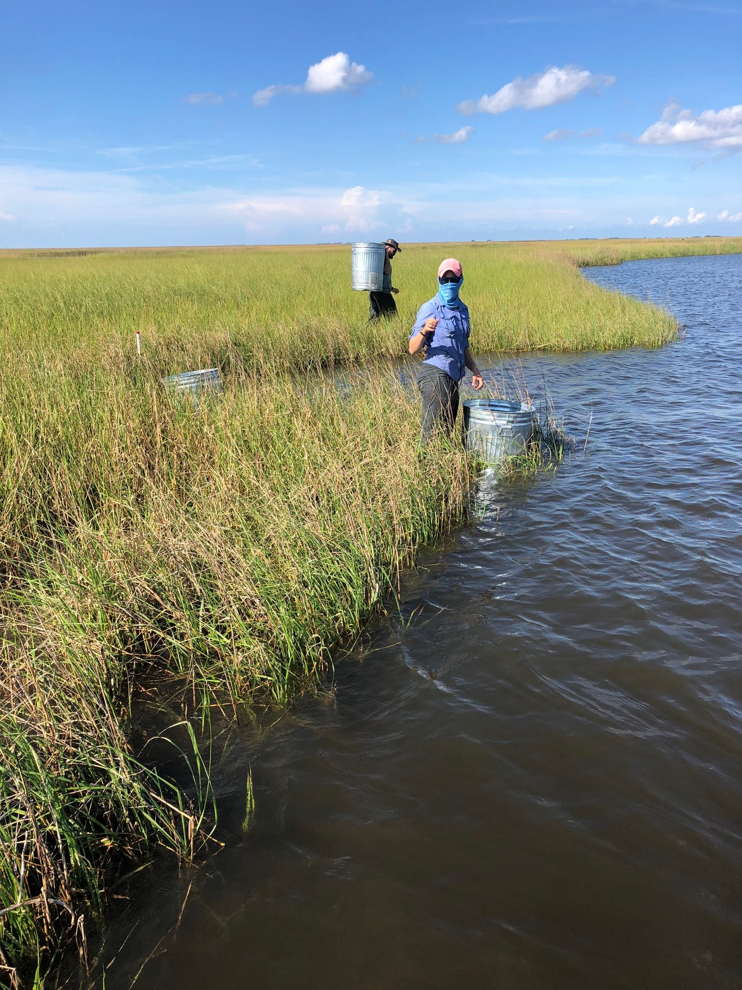Cylinders are placed along the marsh edge and water pumps are used to suction all the water out and filter for small epifaunal organisms. Photo credit: C. Martin