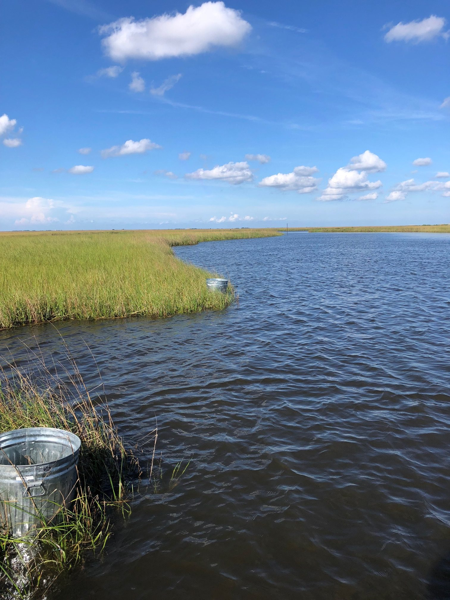 Cylinders encompass a known volume of marsh allowing animal density to be calculated. Photo credit: C. Martin