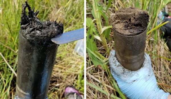 Sediment core collections. Left: from sandy dredge deposits at Lake Hermitage marsh creation site. Right: organic, mud rich sediments from natural marshes. Credit: Annette Engel.