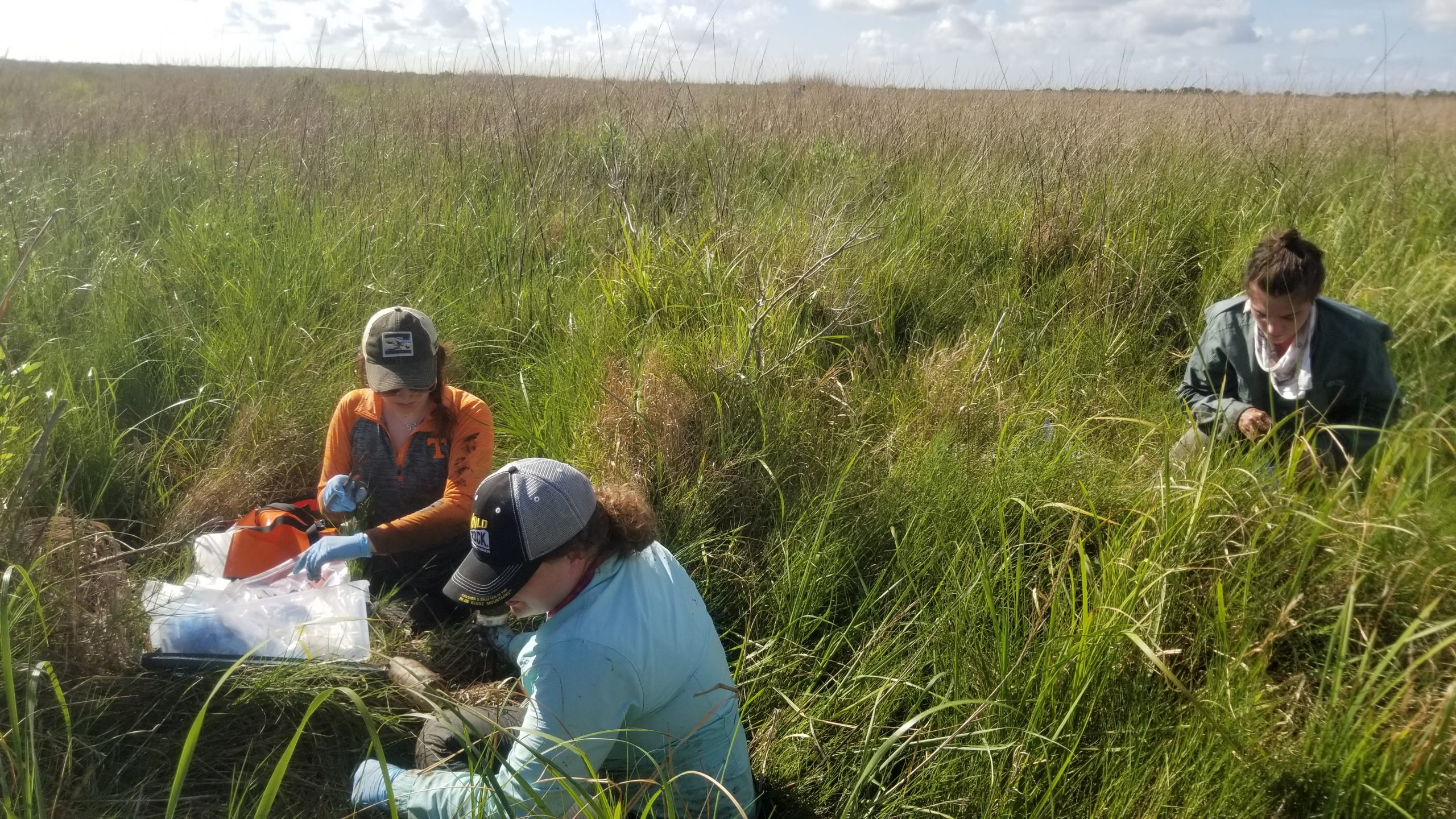 Sampling restored marsh for microbial communities and biogeochemistry. Credit: Annette Engel